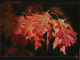 First of autumn Enya