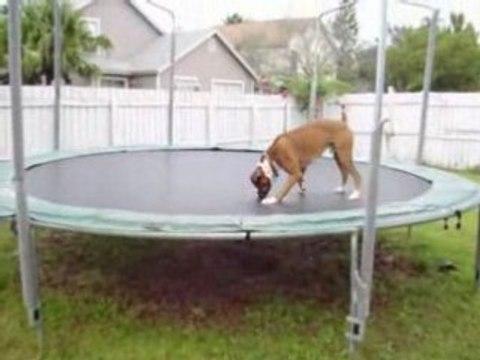 Jumpin' Dog Flash