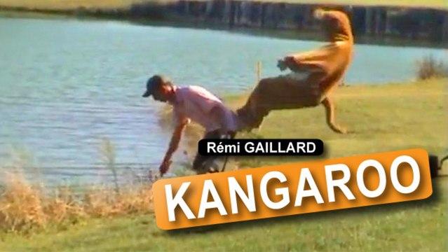 Remi das Känguru