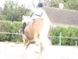 cours obstacle ligne+oxer