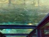 Seaquarium du Grau du Roi