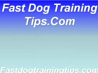 Dog Crate Training Information