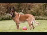 Guter Hund Böser Hund