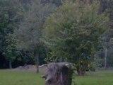 a 450 masai