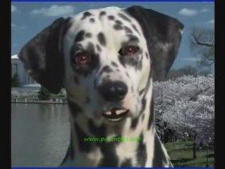 Holy Mackrell Talking Dog Dog Training
