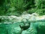 Parc Animalier des Pyrenees - Loutres - Sept 2008