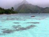 Dauphins et baleines à Moorea, Polynésie