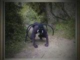 Minute Culturelle - La Toile d'araignée