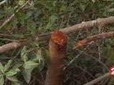 Restauration de la mangrove au Sénégal
