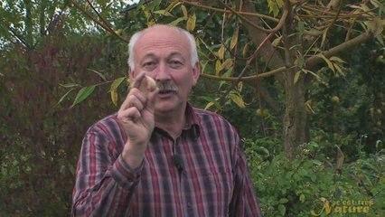Visionnez les Cours Vidéo de �chalotes - Cours de jardinage