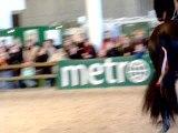 Frison salon du cheval 2005