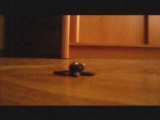 5) pieuvre mutante
