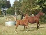 chevaux au galop the end