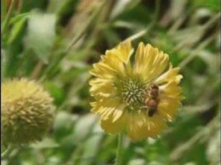 Best slowmotion honey bee!!