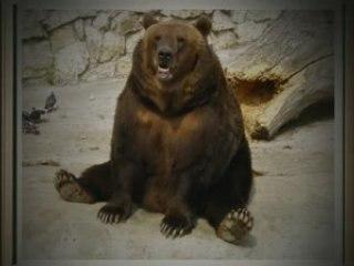 Minute Culturelle - L'ours en peluche