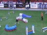 Staffie Championnat du monde d'agility