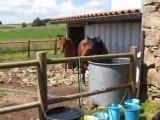 Horse playing with water - un cheval joue avec de l'eau