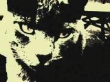 CAT LIFE IN COLLONGES-LA-ROUGE