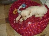 mon nouveau chien la famille et amie