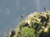 Video condor Pérou