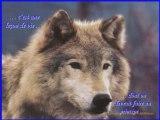 Comprendre le Loup, Loup et communication :