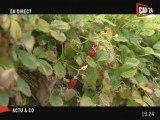 Alimentation : Direct chez le fournisseurs dans les Yvelines