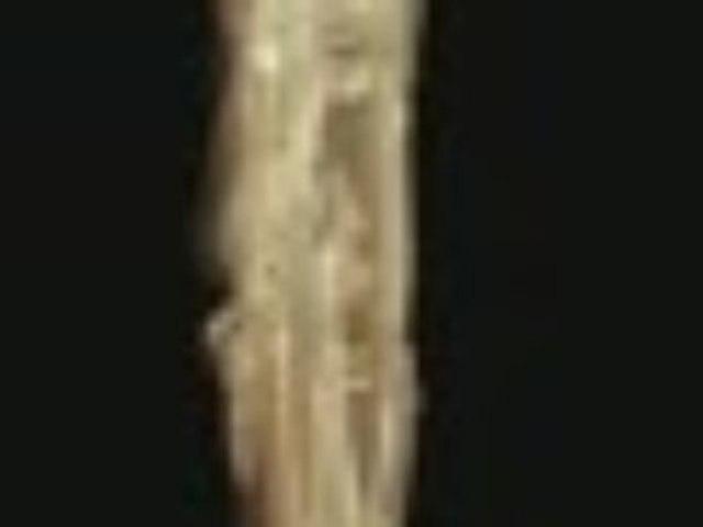 Sen Pingkhala - Jobb orrvonal (Right nose line)
