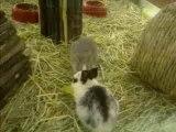 mini ウサギ アンゴラ 犬