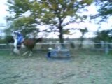 Oxer bleu