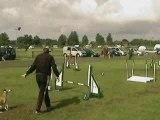 Cranborne - Medium Novice Jumping - Tig