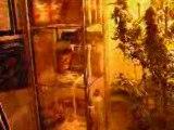culture bio cannabis beu marihuana