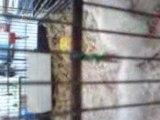 ecureuils lilas au marché