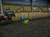 Quatrieme de blonde saut d'obstacle ( cso )