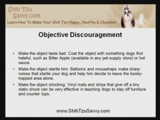 Shih Tzu Puppy Training: Substitute Bad Behavior For Good