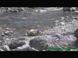 Les marmottes jouent au bord de la rivière