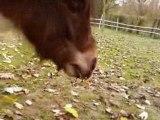 Wayne le mangeur de pommes ...