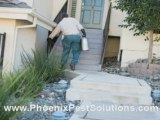 Phoenix Pest Control and Exterminator - How To Be Pest Free