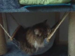 monsieur le chat guizmo