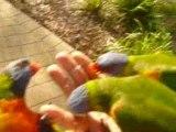 Les perroquets attaquent!!!