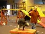 Capitole agility 2008 015