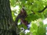 Vidéo écureuil roux