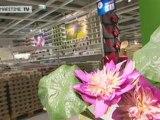 Le magasin IKEA Rouen / Tourville est ouvert