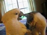 perroquet et chat