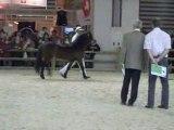 Concours d'élevage de poney Dartmoor