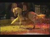 Spectacle équestre Mélodie en Cheval Majeur
