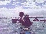 Lagon Bora Bora Raies Pastenagues Requins