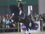 Jeune frison a vendre au salon du cheval =)