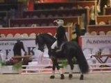 Eloi Etalon Frison Haras de Graffard Salon du cheval 2008