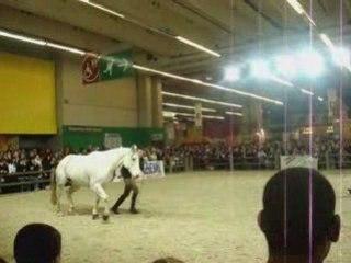 Salon du cheval 2008