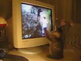 Chaton mignon tape sur des chats virtuels